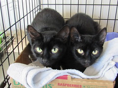 Belle (Available) & Gracie (Adopted) - 2.5 year old spayed sisters