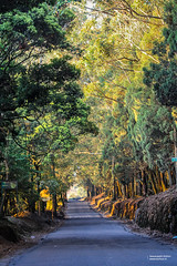 """I know that there is a place for me somewhere out there"" (Navaneeth Kishor) Tags: doddabetta ooty road travel landscape discoverplanet vibrance trees shades autumn"