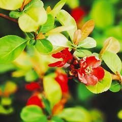 春季の自然 (Jon-Fū, the写真machine) Tags: outdoors 野外 nature 自然 flower flowers 花 華 plant plants 植物 flora tree trees 木 木々 snapseed japan 日本 nihon nippon ジャパン ジパング japón जापान japão xapón asia アジア asian fareast orient oriental aichi 愛知 愛知県 chubu chuubu 中部 中部地方 nagoya 名古屋 jonfu 2016 olympus omd em5markii em5ii em5mkii em5mk2 em5mark2 オリンパス mirrorless mirrorlesscamera microfourthirds micro43 m43 mft μft マイクロフォーサーズ ミラーレスカメラ ミラーレス一眼カメラ ミラーレス機