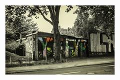 Graffiti   Cologne (Onascht) Tags: cologne colorkey dom kln nrw nikond610 sigma50mm sommer unterfhrung brcke graffiti street tree nordrheinwestfalen deutschland de