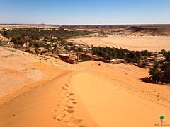 Ascension de la grande dune de Bni Abbes (Ath Salem) Tags: algrie bchar taghit beni abbes kenadsa barrage djorf torba dsert sahara tourisme dcouverte palmeraie           dunes zousfana saoura