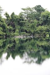 IMG_0467 (trevor.patt) Tags: palauubin singapore quarry heron