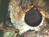 Moth Faceted Compound Eye, Proboscis-Tongue and Front Leg Super Macro DSCF2241 (Ted_Roger_Karson) Tags: fujifilmxs1 handheldcamera raynoxdcr150 goldenrodflowers supermacro supermacrolens