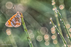 """Once upon a time in a magical enchanted world..."" (lorym_) Tags: macro macrodreams natura farfalla farfalle butterfly butterflies mariposa bubbles bokeh vintage vintagelens tessar tessarjena50 carlzeisstessar50 carlzeisstessarjena5028 carlzeisstessarjena carlzeisstessarjena50 carlzeisstessar502 carlzeissjena"