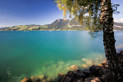 ~ surreal ~ (SteffPicture) Tags: steffpicture thunersee see lake holiday ferien visitswitzerland canon 50mm birke tree baum wasser hdr