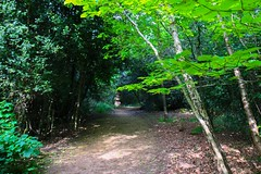 Woodland path (frankshepherd2) Tags: frankshepherd canon70d canon natura green leaf leaves landscape countryside forest trail trees path woods walk hiking outside outdoor plant tree shadesofgreen nature natur shadows