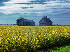 In a Field of Gold (kendoman26) Tags: hdr nikhdrefexpro2 nikcoloreffex4pro barn corncrib goldenfield soybeans ruralscene ruralamerica grundycountyillinois fuji fujifinepix fujifinepixf750exr fujihdr