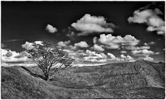 On Top Of The Volcano (Rolf Siggaard) Tags: auckland clouds environmental fujix100s mirrorless nature newzealand outdoors sky tree mtwellington 23mmapsc monochrome blackwhite x100s inexplore