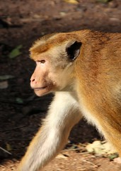 sri_lanka_trincomalee_08 (Kudosmedia) Tags: sri lanka trincomalee nelson fort fredrick harbour temple coast beach deer monkey legend fortress asia claringbold trevor