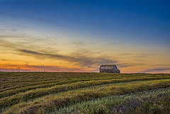 Canola Sunset (AnitaErdmann) Tags: 2016 alberta anitaerdmann september abandoned agriculture canola swathed swath outdoor barn sunset sunrise erdmann anitaerdmann2016 windmill trochu harvest explore