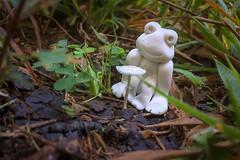 Frog with Toadstool Table (tisatruett) Tags: frog mushroom toadstool forrest woods leaf macro light lovely scene landscape