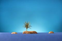 Island (William John Cooper) Tags: studio studiolighting studiolight studiolights model food art fineart flash landscape small smallscale scale peanut plant tropical blue bluesky sky sea ocean