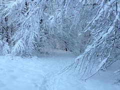Winterpracht (AndreasHerbert) Tags: winter burr mörschied mörschieder