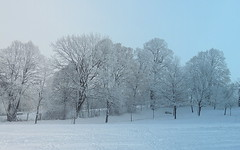 the coldness (sabrina. G, busy) Tags: winter frost dezember klte eisig abigfave anawesomeshot flickrdiamond blinkagain rememberthatmomentlevel1