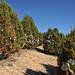 2012_Loop_360_Trees_126
