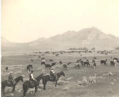 Pasadena. Business & Industry. Grapes. Cattle Ranching (Pasadena Digital History) Tags: mystery pasadena