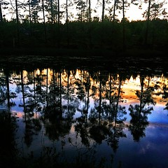 sunset in the pond (SS) Tags: camera blue light sunset red summer vacation sky white black tree water colors june yellow backlight composition contrast forest reflections square countryside pond mood shadows view angle sweden pov branches 4 perspective scenic silhouettes sverige framing tones bianco celeste iphone riflesso svezia 2011 shimmers atmophere