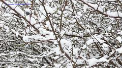Winter in Holland, Snow covered branches, Zutphen - 0965 (HereIsTom) Tags: travel trees winter snow cold holland ice nature netherlands dutch season europe view branches sneeuw natuur scene panasonic covered lucht wonderland zon landschap ijs zutphen gelderland webshots bronsbergen tz5 wsweekly12 wsweekly130