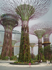 Supertree Grove, Singapore (Aidan McRae Thomson) Tags: modern singapore contemporary gardensbythebay supertrees supertreegrove