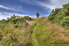 Follow the Track (Jan Kranendonk) Tags: park uk blue wild summer sky green nature field grass landscape scotland spring edinburgh europe britain path hill scottish sunny trail british footpath holyroodpark