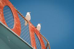 California Seagulls (Stuart Wrightson) Tags: california beach la losangeles santamonica