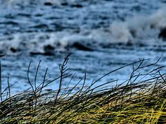 Porsguen (y.caradec) Tags: winter sea mer france beach focus brittany europe waves hiver dune wave bretagne vegetat