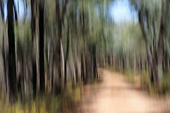 Untitled (Dirk Wallace) Tags: abstract tree art forest sony australia victoria icm chiltern wodonga ironbark a850 intentionalcameramovement