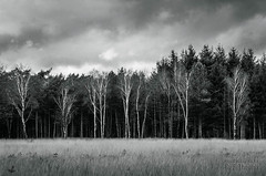 De Malpie (Art and Nature Photography) Tags: nature netherlands woodland pond europe heath naturepark valkenswaard wetland protected heathland noordbrabant demalpie 2012ruditheunis lowdensityforest wwwruditheuniscom