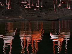 Red Legs (frischauge) Tags: red color reflection bird 20d nature water rose canon germany fun funny colorful legs flamingo surreal unreal efs bizarre ef flickrchallengegroup flickrchallengewinner wwwfrischaugede wsnature