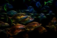 blue red fish swim canon cool warm near digitalart georgiaaquarium far 60d