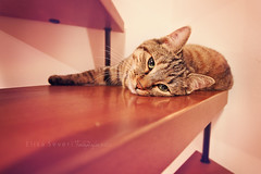 so tired of cleaning the stairs! (Elisa Severi) Tags: portrait animal cat relax kitten relaxing kitty gatto ritratto animale gatta ciuffa elisaseveri