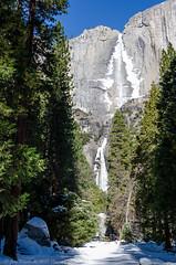Yosemite National Park in the Winter (Images by John 'K') Tags: yosemite yosemitenationalpark yosemitevalley nationalpark nps johnkrzesinski johnk d7000 california unitedstates winter snow randomok