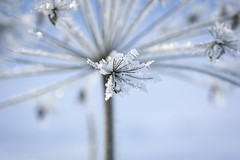 Distance/Avstånd (Fotograf Ann-Sofie Åberg) Tags: blue winter snow macro ice frost sweden avstand macroflowerlovers macrodreams fotosondag fs130127