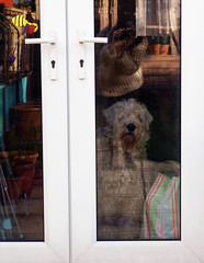33 | With Raggs (Auntie P) Tags: door dog selfportrait reflection glass mirror ofme wheatenterrier auntiep 365days february2013 365days2013 2013week5