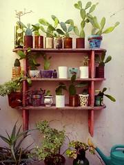 Cactus Shelf (irecyclart) Tags: cactus pots