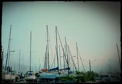 rumo ao mar (luyunes) Tags: barco embarcao mar escuna marina urca veleiro luciayunes motomaxx