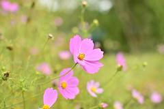 Plant park in Hirosaki-castle park (junjunohaoha) Tags: aomori hirosaki japan flower plant nikon d5300