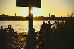 Selfie :: Sonnenuntergang / Sunset Mainz (tmertens0) Tags: mainz gustavsburg sonnenuntergang sunset germany hessen rheinlandpfalz rhein rhine mainspitze pentaxm 50 14 warm orange light sommer summer bokeh gegenlicht backlight backlit