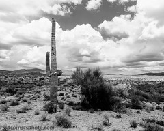 Saguaro Cactus and Thunderstorm, Yavapai County, AZ (4 Corners Photo) Tags: 4cornersphoto arizona blackandwhite cactus clouds desert flowers landscape mountains northamerica rural saguarocactus scenery shadow sky spring thunderstorm unitedstates weather yavapaicounty bagdad us