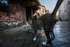 STREET CAT (Ache_Hsieh) Tags: street cat nikon d750 tamron sp 1530mm f28 di vc usd a012
