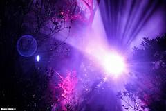 Into the shine (Mauro Hilrio) Tags: light backlight portugal cascais forest park purple artistic shine flare night glow