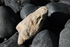 Driftwood (laurelpattee) Tags: wood wooden driftwood texture beach cobble rock rocks stone stones yaquina newport