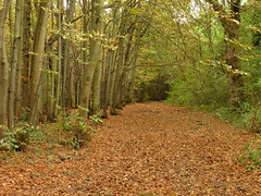 The Colours Of Autumn (Alan1954) Tags: nature autumn walking fall 2016 sussex leaves