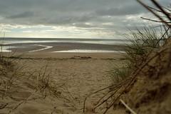 Sand n stuff (robjvale) Tags: nikon d3200 beach swansea sand sea sky water wales grass twigs stick
