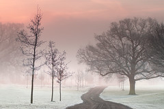 pink dawn mist (blueskyjunction photography) Tags: uk trees sky white mist cold london sunrise landscape dawn frozen nikon frost path freeze gb dslr 2012 harrow d90 harrowonthehill yahoo:yourpictures=yourbestphotoof2012