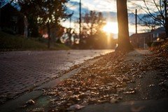 A fall street at sunset (Dave DiCello) Tags: beautiful skyline photoshop nikon pittsburgh tripod usxtower christmastree mtwashington northshore northside bluehour nikkor hdr highdynamicrange pncpark thepoint pittsburghpirates cs4 ftpittbridge steelcity photomatix beautifulcities yinzer cityofbridges tonemapped theburgh clementebridge smithfieldstbridge pittsburgher colorefex cs5 ussteelbuilding beautifulskyline d700 thecityofbridges pittsburghphotography davedicello pittsburghcityofbridges steelscapes beautifulcitiesatnight hdrexposed picturesofpittsburgh cityofbridgesphotography
