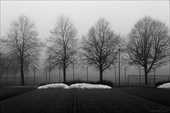photo no. 2500 on my photostream !?! (*regina*) Tags: schnee trees mist snow fog nebel bume