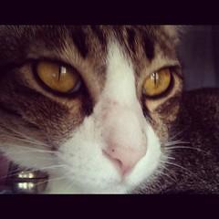 จีจี้ แมวเอม