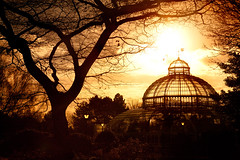 Golden Palm House.jpg (juliereynoldsphotography) Tags: elementsorganizer