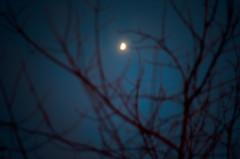 (thisisforlovers) Tags: blue winter sky moon azul night evening noche deep luna cielo invierno tarde nikond7000 andreadorantes